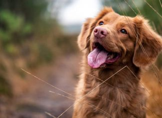 Dog-Care-TipsKeep-Your-Dog-Healthy,-Happy-&-Safe-on-passionarticles