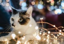 Tips-for-Cat-Adoption-for-the-First-30-Days-on-passionarticles
